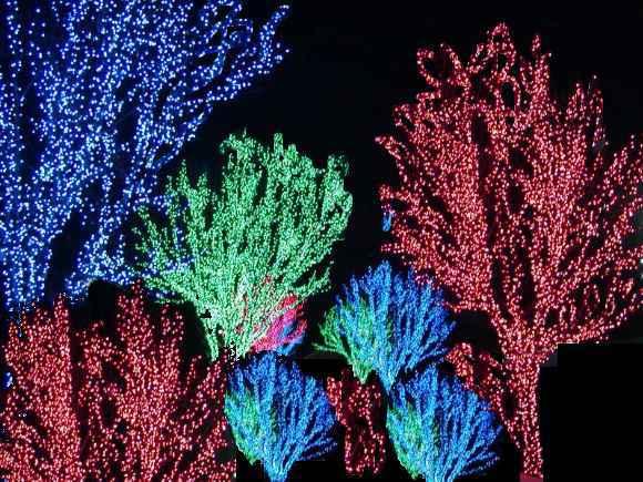 Wild Holiday Lights
